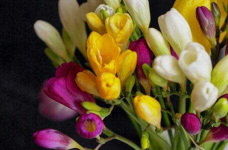Frezia – minunatele flori misterioase