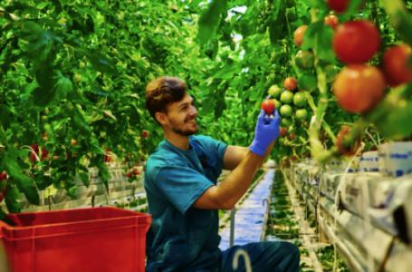 Business în agricultură: 5 sfaturi pentru micii fermieri