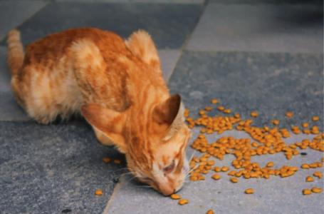 5 motive să-ți iei o pisică